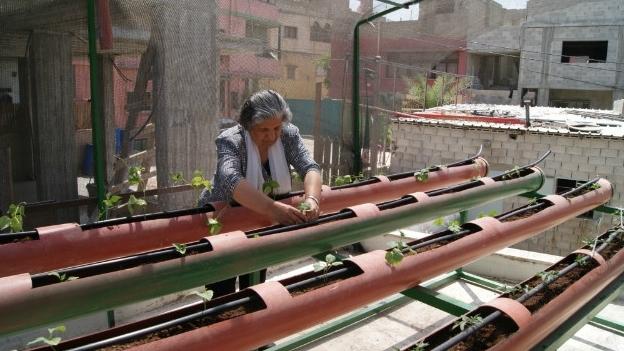 Los huertos en las azoteas 39 cosechan 39 calidad de vida para for Huerto en azotea