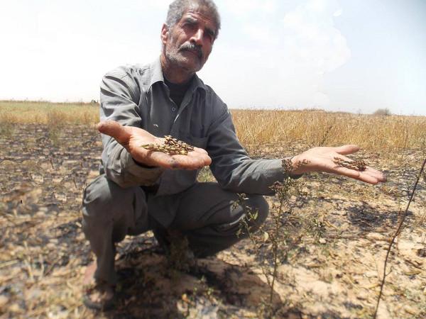 Palästinensischer Bauer