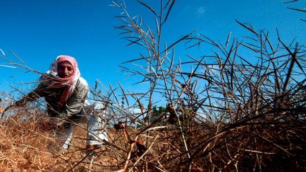 Israel rocía sustancias toxicas sobre tierras de cultivo en Gaza
