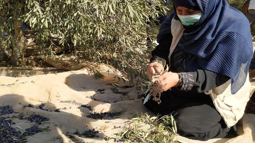 El olivo, dignidad y vida, o cómo las mujeres palestinas defienden su identidad y apego a la tierra